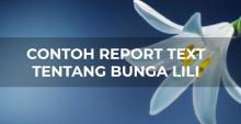 Report Text Bunga Lili